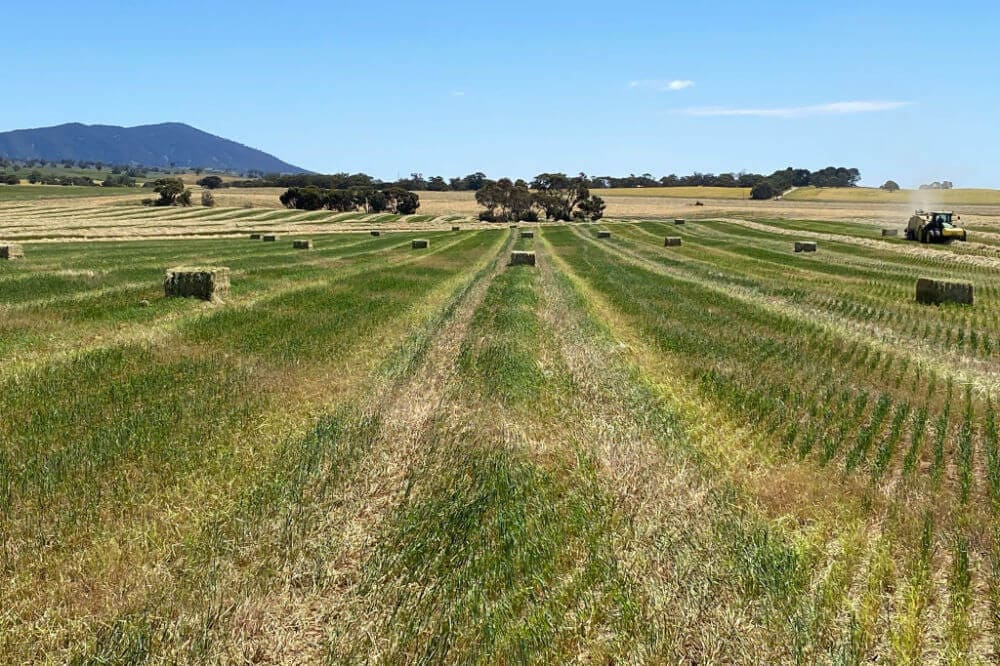 Nutritional Feed Supplies Hay Harvest